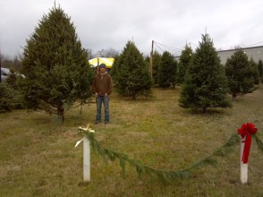 Dave's Maine Wreaths and Trees offers a large selection of fresh cut Christmas Trees!