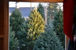 Dave's Maine Trees on Display in Lynchburg, Virginia