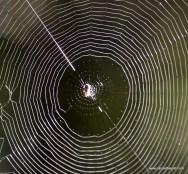 Allagash Web