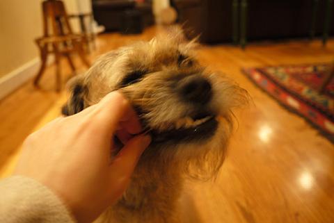 干し芋と犬