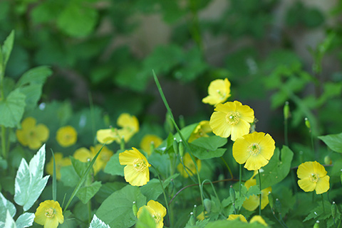 May_garden_flower9