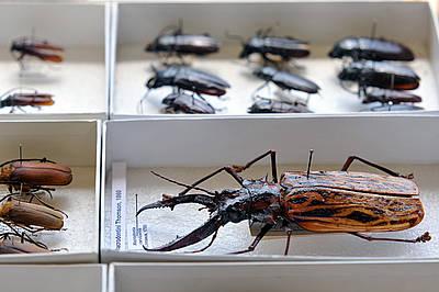 Insectos listos para su traslado