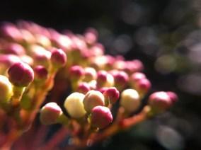 Microcosmos, Arbutus unedo flowers