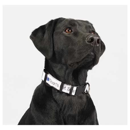 Promotional Dog Collar