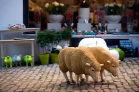 Sheep, Rue Saint-Jean