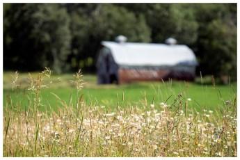 Field and barn. BC