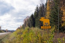 Those darn moose (just before Prince George). I, of course, kept my eyes peeled for a lumbering bull.