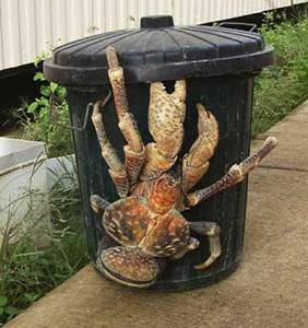 Big ass crab
