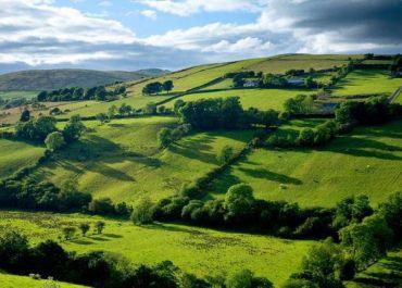 Lush fields in Ireland