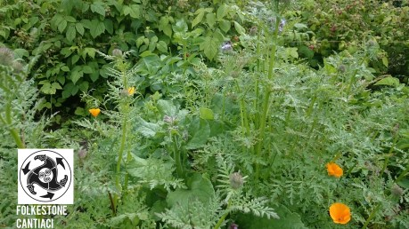 Folkestone, Cantiaci, Folkestone Cantiaci, Community, Transition Town, Allotment, Raspberries, Caterpillars, Cabbage White, Grow Your Own