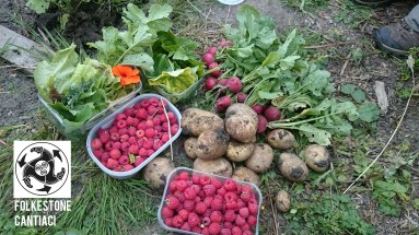 Folkestone, Cantiaci, Folkestone Cantiaci, Community, Transition Town, Allotment, Potatoes, Home Grown