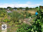 allotment001