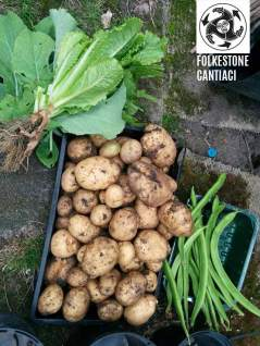 allotment009