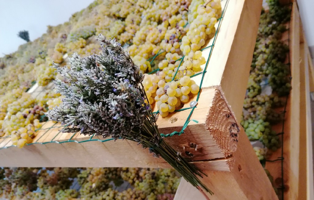 Appassimento su graticci delle uve per il Vin Santo di Vigoleno