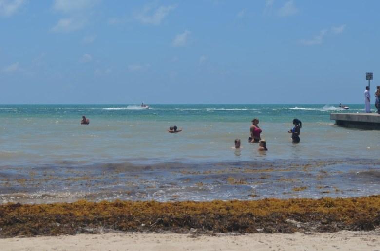 Key West praia sargaco
