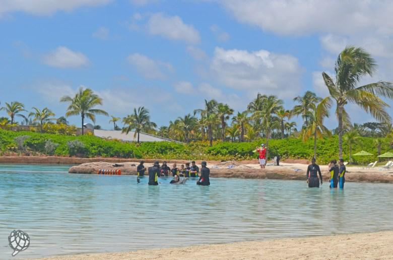 praia de golfinhos nassau