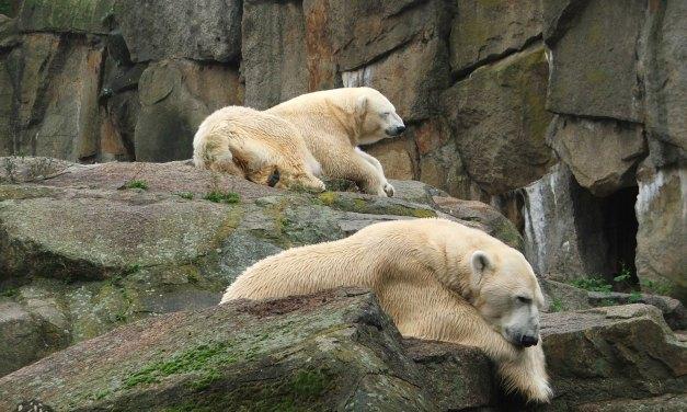 Zoológico de Berlim – lindo demais