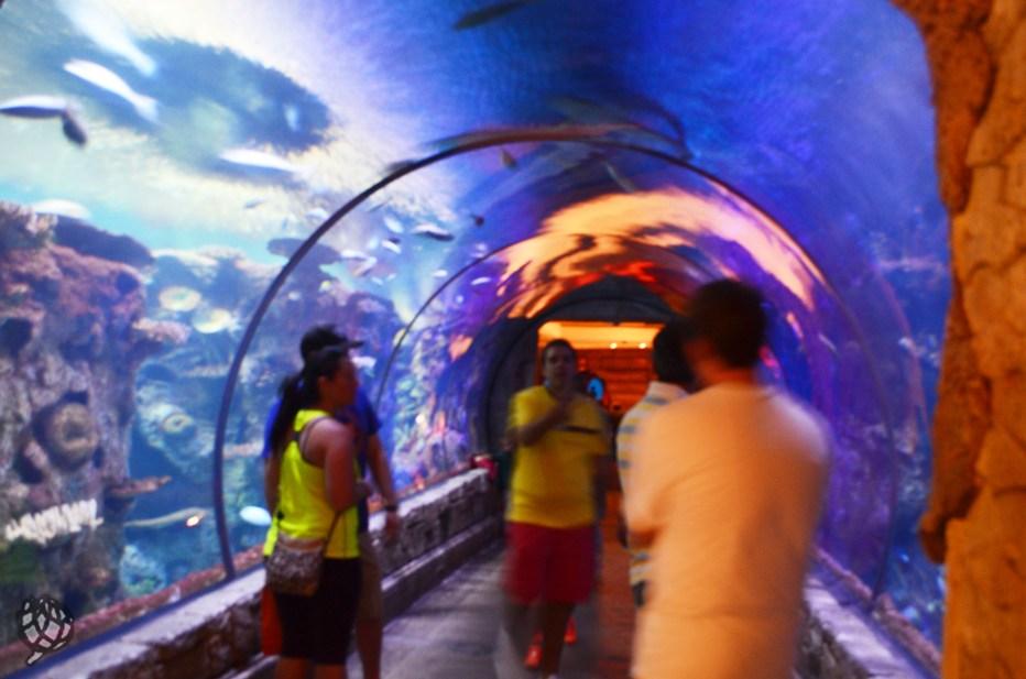 Aquario LV tunel2