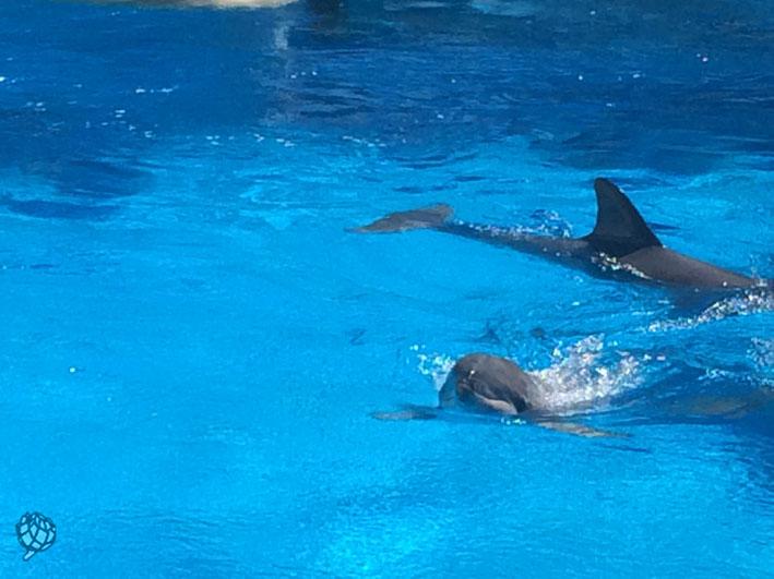 Secret Garden golfinho2