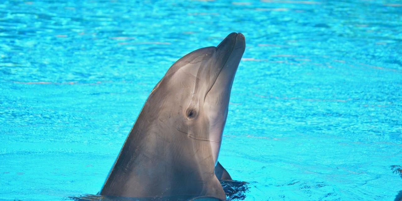 Secret Garden and Dolphin Habitat no Mirage em Las Vegas