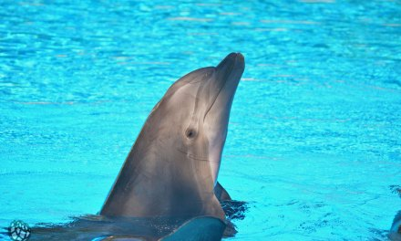 Secret Garden and Dolphin Habitat no Mirage em Las Vegas