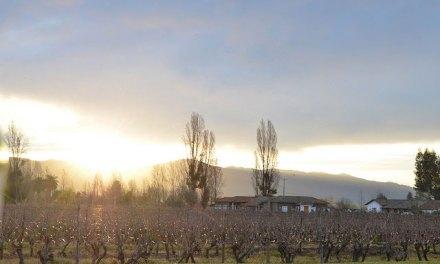 Vale do Colchagua – um paraíso regado com os melhores vinhos chilenos