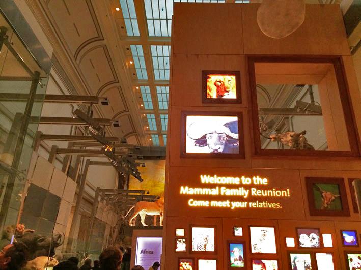 Museu-de-Historia-Natural-de-Washington-4