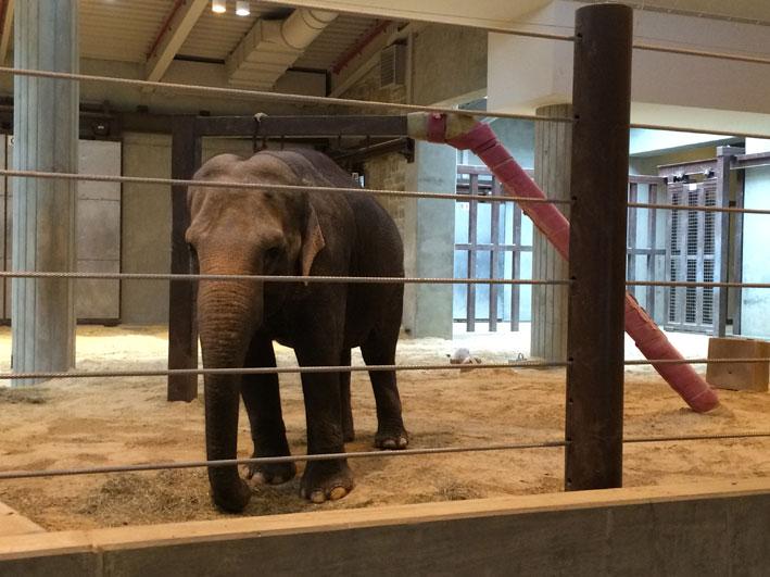 Zoo-de-Washington-elefantes2