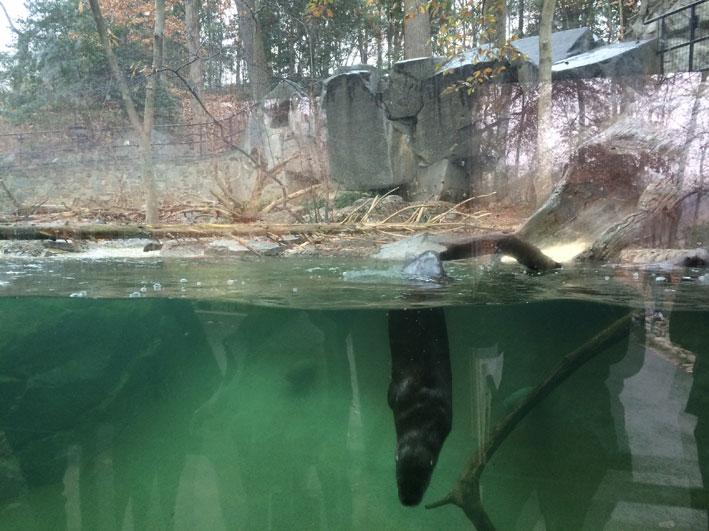 Zoo-de-Washington-focas1