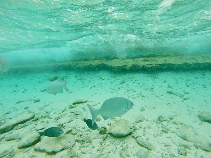 Como-e-o-passeio-a-Haines-Cay-e-Acuario-peixes2