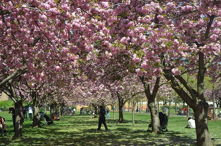 Como é New York na primavera
