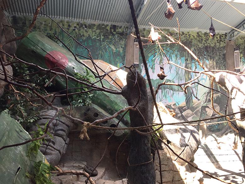 Morcegos no Aquário de São Paulo