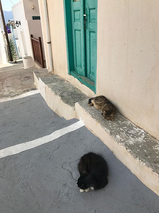 Gatos pelas ruas de Plaka em Milos
