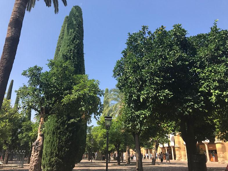 Pátio das Laranjas da Mesquita de Córdoba