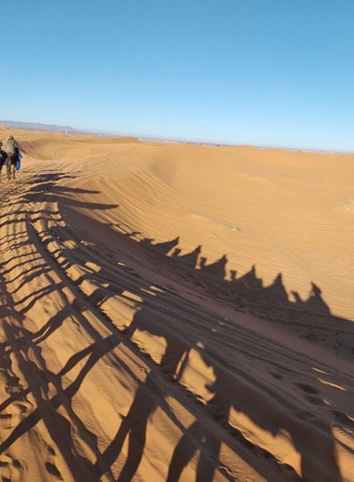 Passeio de dromedários pelo deserto do Marrocos
