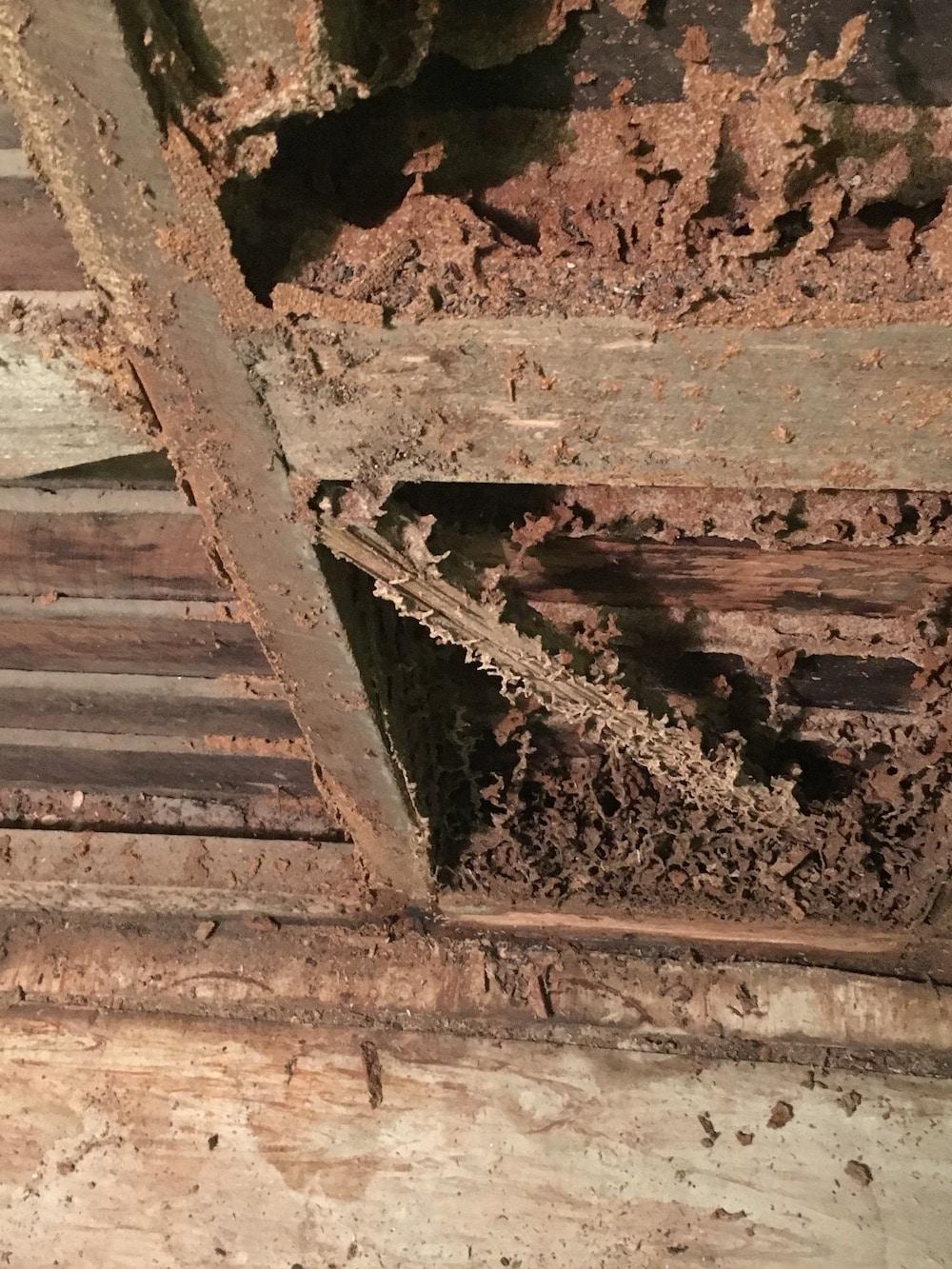 termite_damage_Albury