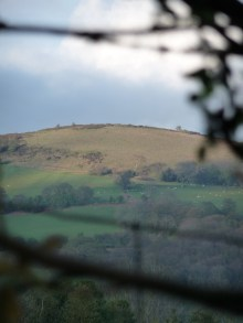 Peaking Through the Hedgerow