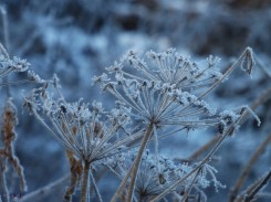 ... Winter, the aged chief, Mighty in power, Exiles the tender leaf, Exiles the flower. ~ Robert Fuller Murray 1863–1894, A December Day