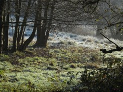 Green moss shines there with ice encased; The long grass bends its spear-like form; And lovely is the silvery scene When faint the sun-beams smile. ~ Robert Southey, 1774-1843, Ode Written on the First of December