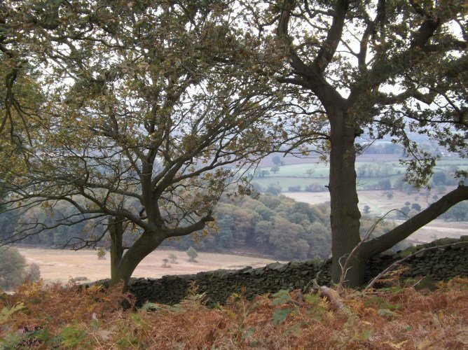 We look west from Old John's Wood across Sliding Stone Enclosure, past the Grey House toward Rothley.