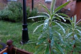 Lovely raindrops captured.