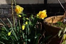 Basking in sunlight.
