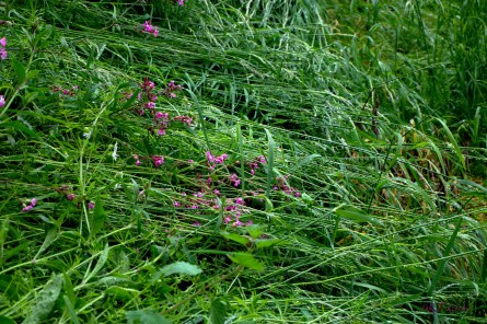 You have to look closely, but the sparkles are there, running along the length of the grasses and stems.