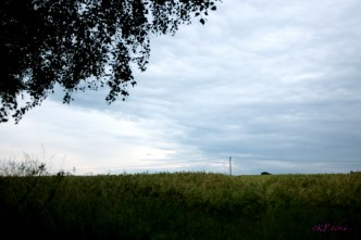 The barley field around the corner from the house. The clouds were still high, but they flew inexorably across the horizon.