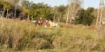 Cañuelas en Cuarentena algunos cabeza de termo juegan al Pato a 200 metros del Castillo de la Finaco.
