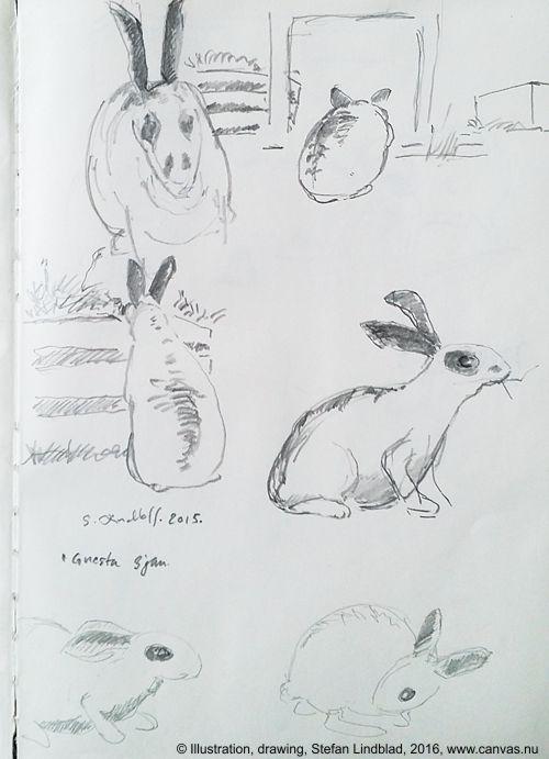 Illustratör Stefan Lindblad, teckning, blyerts, Kaniner i Gnesta, Stockholm 2015