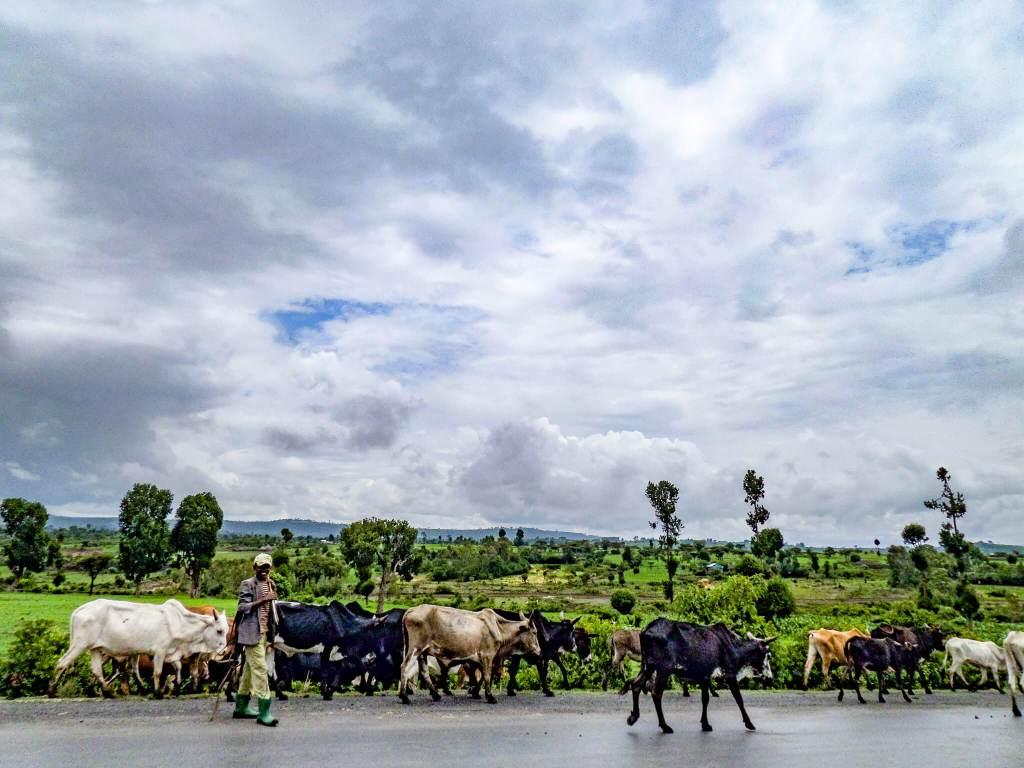 Man herding livestock in the Ethiopian countryside - Great Rift Valley