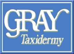 gray taxidermy logo1