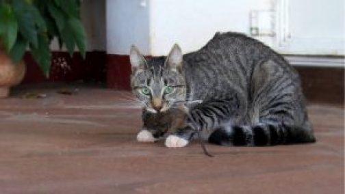 Compartilhar comida é um dos Sinais de que o gato gosta do seu dono