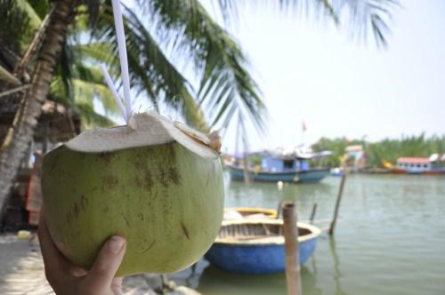 J+240 Une coconut sous les palmiers…